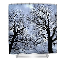 Winter Trees Shower Curtain by Elena Elisseeva