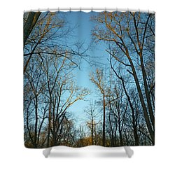 Shower Curtain featuring the photograph Winter Trees by Pete Trenholm