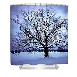 Shower Curtain featuring the photograph Winter Twilight Tree by Jaki Miller