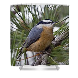 Winter Visitor - Red Breasted Nuthatch Shower Curtain by John Vose