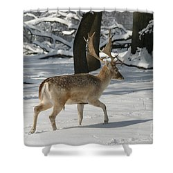 Winter Walk Shower Curtain