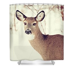 Winter White Tail Shower Curtain by Karol Livote