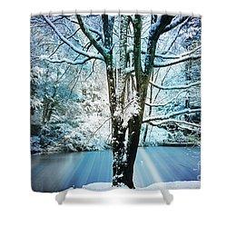 Shower Curtain featuring the photograph Winter Wonderland by Judy Palkimas