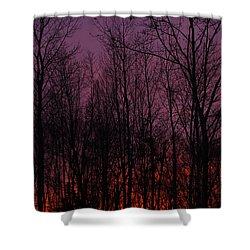 Winter Woods Sunset Shower Curtain by Karol Livote