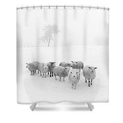 Winter Woollies Shower Curtain