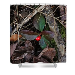 Wintergreen Shower Curtain