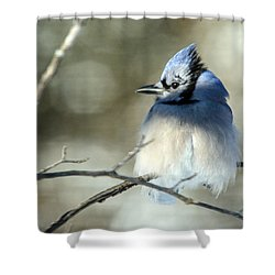 Winter's Jay Shower Curtain