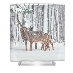 Winters Love Shower Curtain by Karol Livote