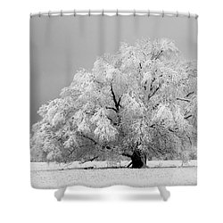 Winter's Majesty II Shower Curtain