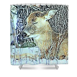 Winter's Nap Shower Curtain by Torie Tiffany