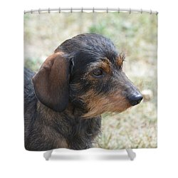 Wire Haired Daschund Shower Curtain
