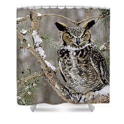 Wise Old Great Horned Owl Shower Curtain