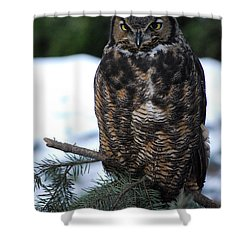 Wise Old Owl Shower Curtain by Sharon Elliott