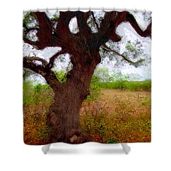 Da214 Wise Old Tree By Daniel Adams Shower Curtain