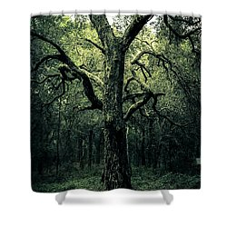 Wise Old Tree Shower Curtain by Robin Lewis