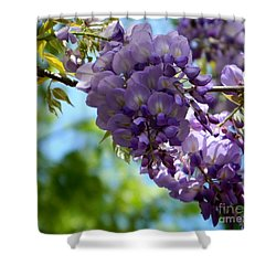 Wisteria Shower Curtain by Andrea Anderegg