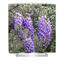 Wisteria Blossom Clusters Abstract Shower Curtain by Byron Varvarigos