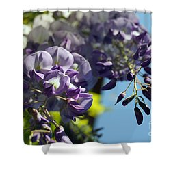 Shower Curtain featuring the photograph Wisteria IIi by Cassandra Buckley