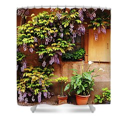 Wisteria On Home In Zellenberg France Shower Curtain by Greg Matchick