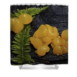 Shower Curtain featuring the photograph Witches Butter by Betty Depee