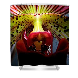 Within The Lady Slipper Shower Curtain by Karen Wiles