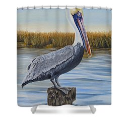 Shower Curtain featuring the painting Wolf River Pelican by Phyllis Beiser