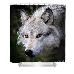 Wolf Stare Shower Curtain