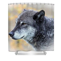 Shower Curtain featuring the photograph Wolf by Steve McKinzie