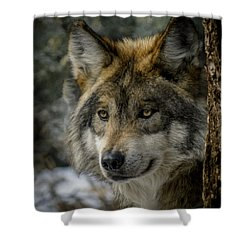Wolf Upclose 2 Shower Curtain