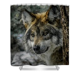 Wolf Upclose Painterly Shower Curtain by Ernie Echols