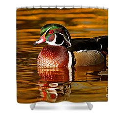 Wood-drake On The Golden Light Shower Curtain by Mircea Costina Photography
