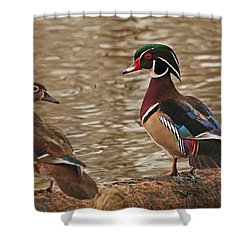 Wood Duck Photo Shower Curtain