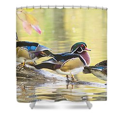 Wood-ducks Panorama Shower Curtain