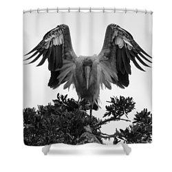 Wood Stork Spread Shower Curtain