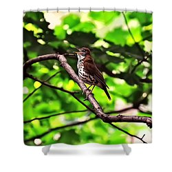 Wood Thrush Singing Shower Curtain