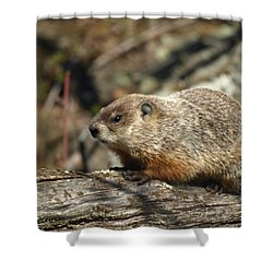 Shower Curtain featuring the photograph Woodchuck by James Peterson