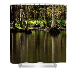 Wooded Reflection Shower Curtain by Karol Livote