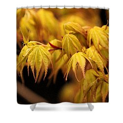 Woodland Awakening Shower Curtain