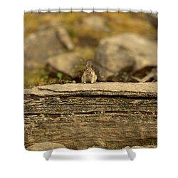 Woodland Critter Shower Curtain