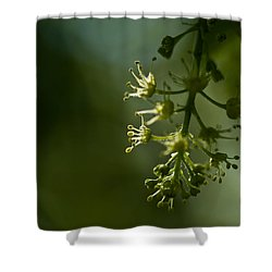 Shower Curtain featuring the photograph Woodland Hues by Liz  Alderdice