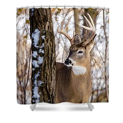 Shower Curtain featuring the photograph Woodland Outlaw by Steven Santamour