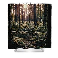 Woodland Trees Shower Curtain by Amanda Elwell