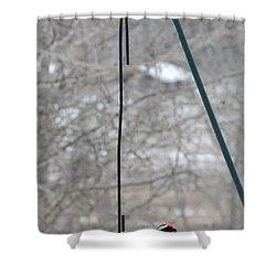 Woodpecker And Chickadee Shower Curtain