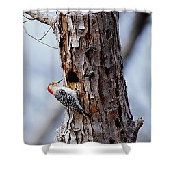 Woodpecker And Starling Fight For Nest Shower Curtain by Gregory G. Dimijian