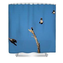 Woodpecker Games Shower Curtain by Jai Johnson