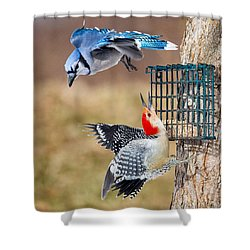 Woodpeckers And Blue Jays Square Shower Curtain