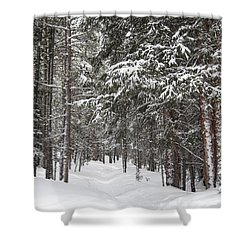 Woods In Winter Shower Curtain by Eric Glaser