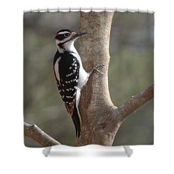 Shower Curtain featuring the photograph Woody by Mim White