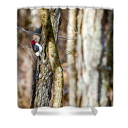 Shower Curtain featuring the photograph Woody by Sennie Pierson