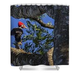 Woody Woodpecker Shower Curtain by David Gleeson